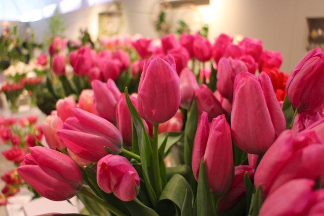 • Wystawa tulipanów